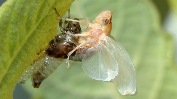 It's Cicada Time!
