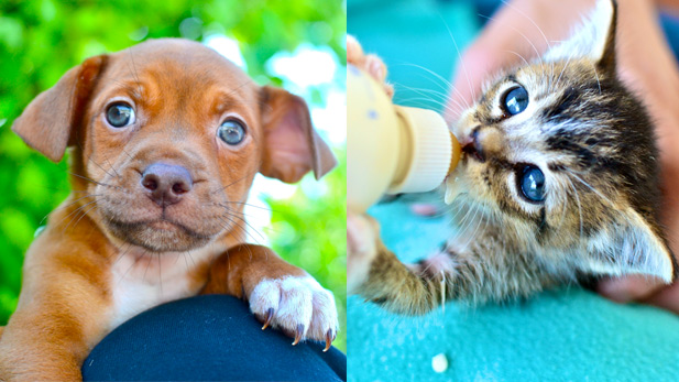 The Heartwarming Stories of 23 Shelter Animals