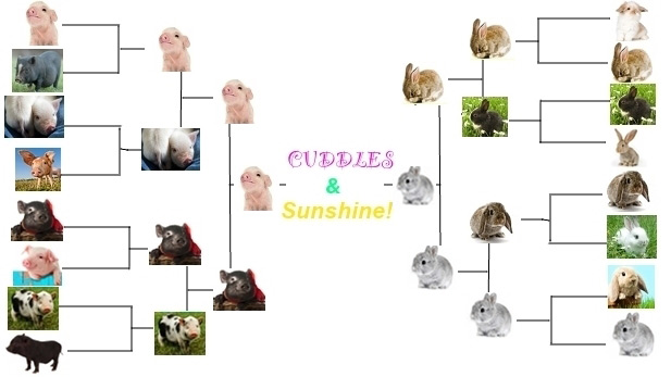 The Piglet v. Bunny Final: Which One Would You Cuddle Harder?