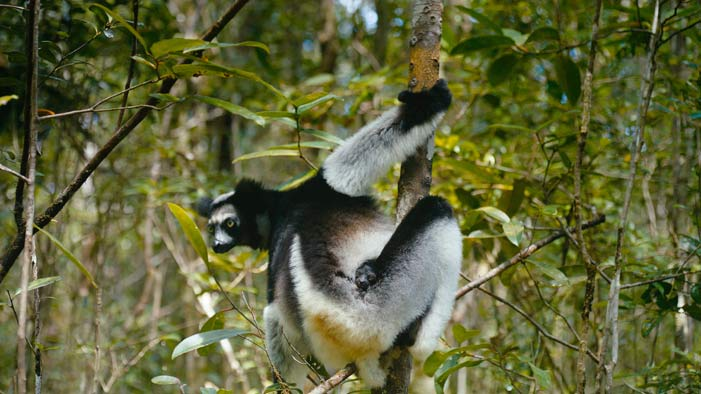 EXCLUSIVE! We Interviewed the Director of Island of Lemurs: Madagascar!