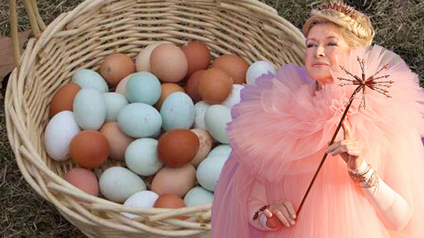 Why Are Martha's Eggs So Colorful?