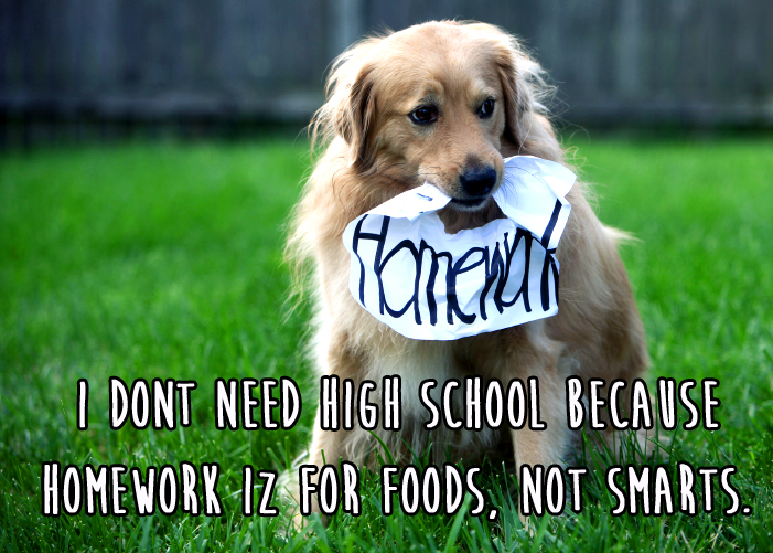 Confused Pets Against High School