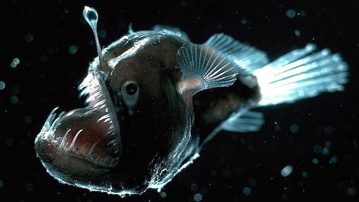 ScaryFish_00_Slide.jpg
