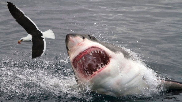 12 Dumb Shark Week Shark Facts!