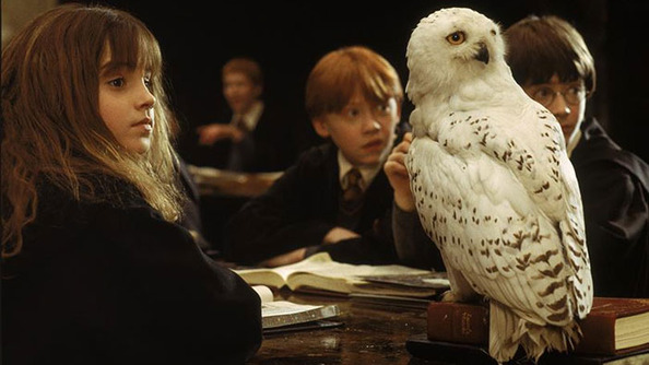 OWL NEWS FROM JK ROWLING! Find Out Which Owl Is Right For You!