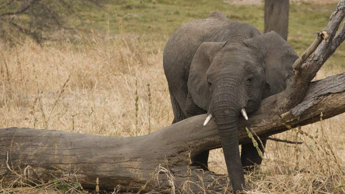This Short Movie About a Man Turning Into an Elephant Will Wreck You
