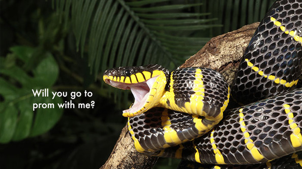 Ways to Get Out of Finals #523: Snakes!