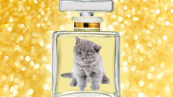 What Does Taylor Swift's Perfume Smell Like? World Domination, Kittens