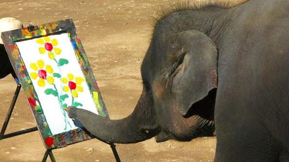 Five Wildly Intelligent Animals