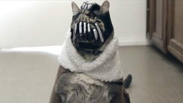 Bane Is Now a Cat!
