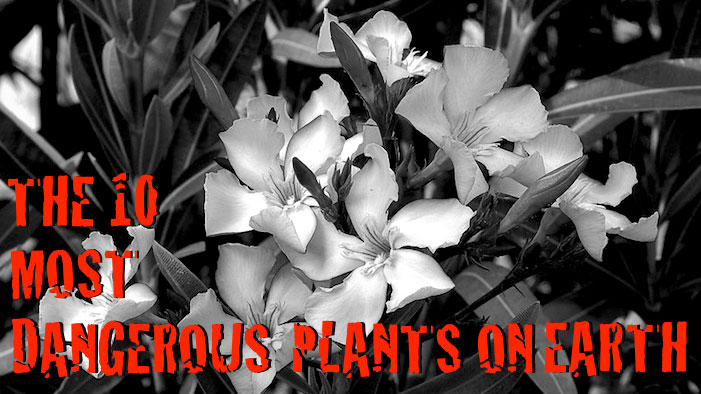 The 10 Most Dangerous Plants on Earth