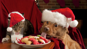 25 Reasons to Celebrate December 18th