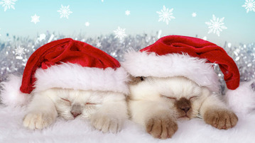 25 Reasons to Celebrate December 25th