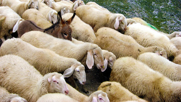 """8 Fake Online Games More Pointless Than """"Sheep Invaders"""""""
