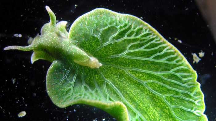 8 Animal-Plant Hybrids: More Critter Or Vegetable?