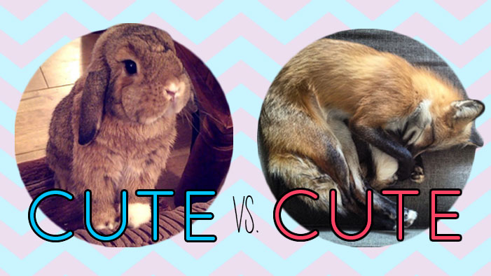 The Furriest Face-Off in History: Pets of Instagram Bracket Finals