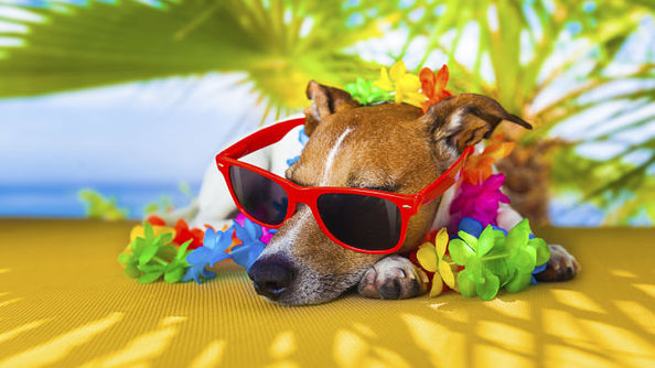 Grab Your Flip-Flops Because We've Got Your SUMMER BUCKET LIST