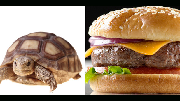 Geek Quiz: Turtle Burger