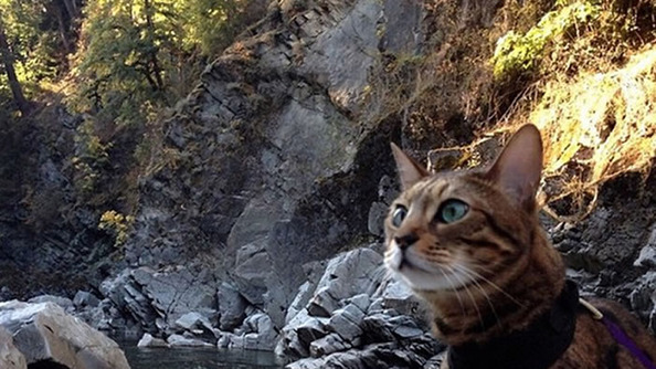 PSA: Cats Are Now Pioneering the Wilderness