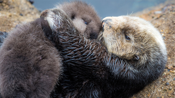 BRB, We're Just Dying Forever Over This Adorbs Baby Otter