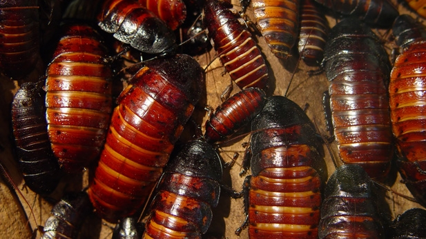 The 5 All-Time Grossest Bug Stories