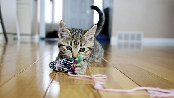 Science Says Cat Videos Are Actually Good for You