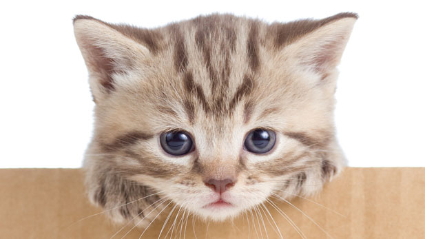 The 6 Greatest Cat Videos of All Time!