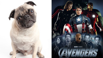Earth's Mightiest Pugs!