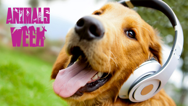 Our Favorite Songs Featuring Animals