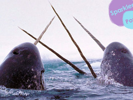 10 Reasons Why Narwhals Are the Best Animals to Ever Live