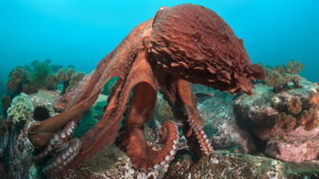 There's Going To Be A Giant, Terrifying Squid On TV