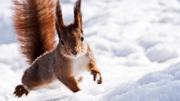 12 Entirely True Facts About Squirrels