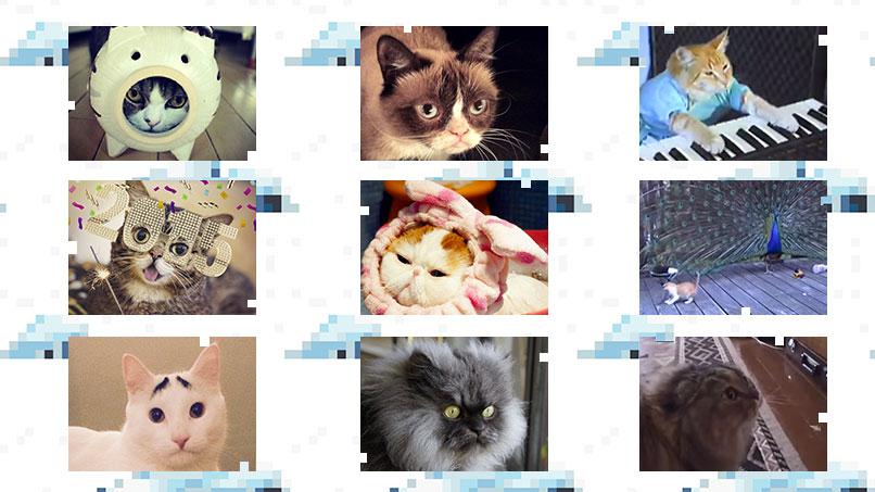 Which Internet Cat Are You?