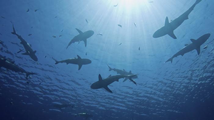 Woman Swims 30 Miles Through Shark Territory (On Purpose)