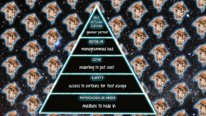 Maslow's Hierarchy of Cat Needs