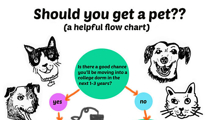 FLOWCHART: Should You Get a Pet?
