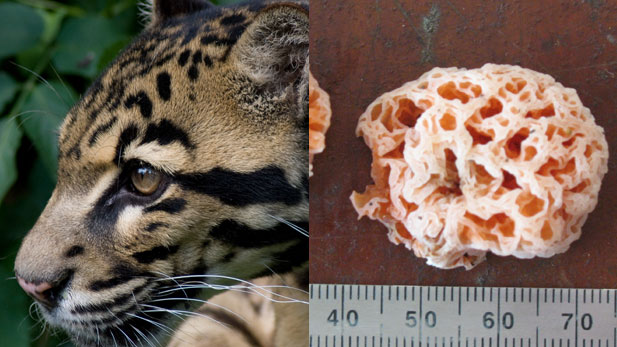Top 7 Coolest Recently Discovered Species