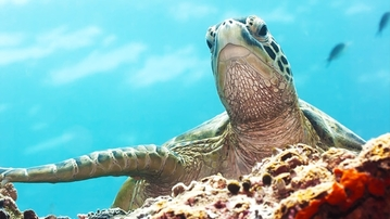 TURTLE FACTS: The Glorious Return!