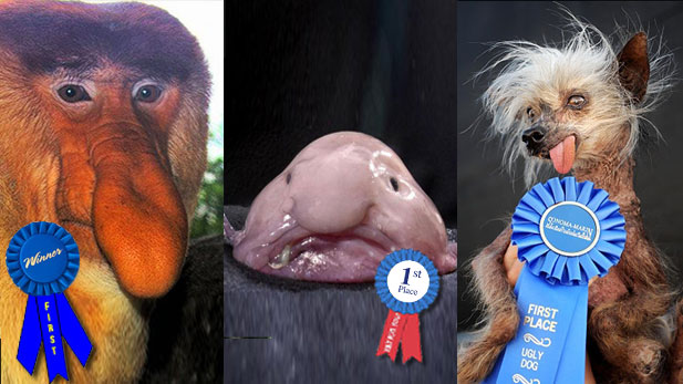 These Animals Win the World's Ugliest Award!