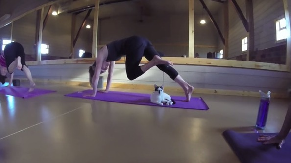 Yoga with Cats: IT'S A THING
