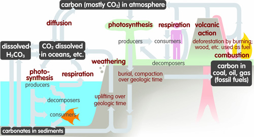 Carbon is found in the atmosphere primarily as co 2 and is also
