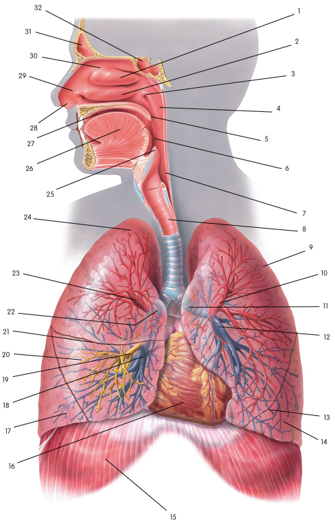 Human Body System - Lessons - Tes Teach