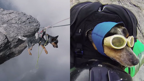 Which Dog Is Most Extreme?